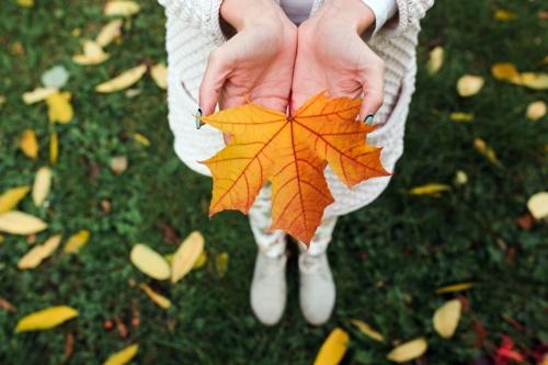 Herbstlaub Blatt
